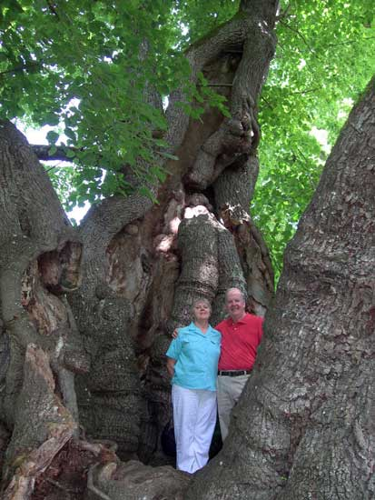 My guests enjoy standing inside a famous 1000 year old tree